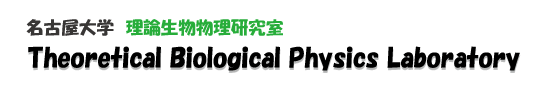 理論生物物理研究室 Theoretical Biological Physics Laboratory